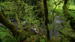 River flowing in Silver Falls State Park Stock Footage