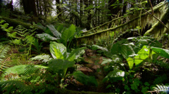 View of forest in Silver Falls State Park Stock Footage