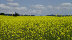 Field of yellow mustard plants near Silver Falls State Park Stock Footage