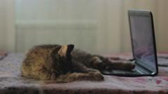 Cat licks near laptop Stock Footage