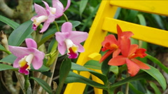 Pink and Orange Orchid. - stock footage