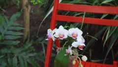 White Flower Orchid in garden. Stock Footage