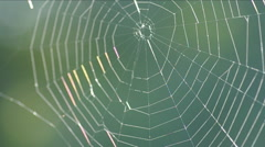 The spider web. Stock Footage