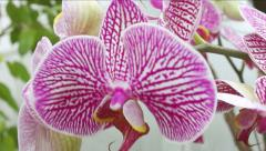 Beautiful orchid. Stock Footage