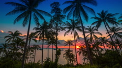 4K TimeLapse - Sunset at sea on a background of palm trees Stock Footage