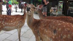 Three Deer In City Street With People Nara Japan Stock Footage