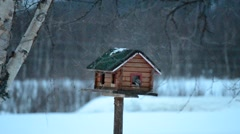 Small birds feeding in homemade bird house in winter Stock Footage
