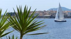 Sailboat and Palm Tree at Sea Stock Footage