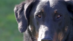 Dog close up Stock Footage