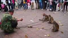 Shenzhen, China: monkey tricks - stock footage