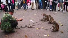 Shenzhen, China: monkey tricks Stock Footage