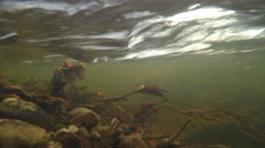 4K branches filmed underwater in a strong stream in autumn Stock Footage