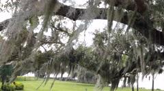 Spanish Moss Florida Stock Footage