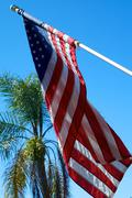 American Flag with palm tree Stock Photos