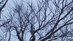 Snowy tree Stock Footage