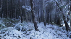 Snowy forest Stock Footage