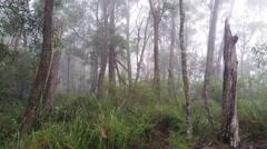 Fog rolling in eucalypt rainforest Australian landscape Stock Footage