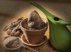 planting rock in clay pot - stock photo