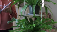 Woman Watering Houseplants Stock Footage