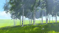 Birch grove edge in spring 4K Stock Footage