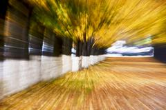 Autumn alley abstraction - stock photo