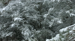 Snowfall Branch Take 2 Stock Footage