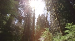 Beautiful old-growth forest Stock Footage