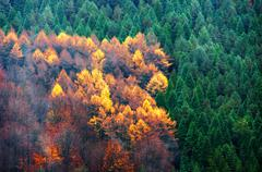 evergreen and deciduous tree forest - stock photo