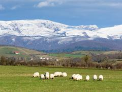 Sheep grazing near Unza Stock Photos