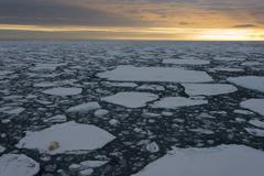 Polar bear on ice floe - stock photo