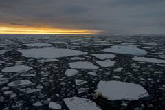 Polar bear jumping on ice floe - stock photo