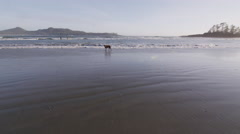 Beach Sun Waves Dog Swell Surfers Stock Footage