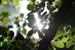 The sun's rays through the branches - stock photo