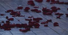 Jm1550 Red Roses Fallen Ground Hardwood Floor Stock Footage