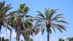 Palm trees, Spain  - stock footage