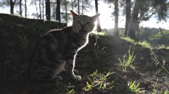 Beautiful cat in the morning Stock Footage