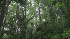 Beautiful forest tropic Stock Footage