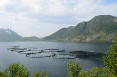 Aquafarming in blue fjord in summer on the island of senja Stock Photos