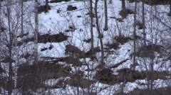 Young male red deer during wintertime Stock Footage