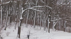 winter thicket - stock footage