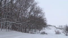 Outskirts of the winter forest Stock Footage