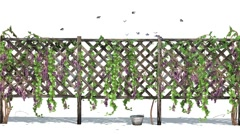 Fence with vine tendrils and butterflies Stock Footage