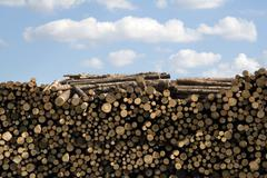 Wood logs stacked up in lumber yard Stock Photos