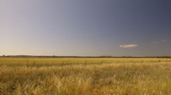 Farming wheat field wide panning to barn and silo in distance Arkistovideo
