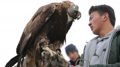 Golden eagle on the hand of a young hunter Stock Footage