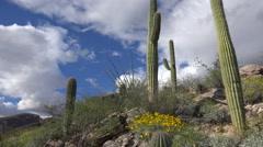 4K Beautiful Arizona Cactus Desert Spring Scenic - stock footage