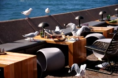 Gull or Seagull bird - stock footage