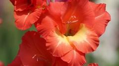 Beautiful flowers in the garden - stock footage