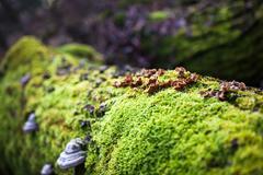 Mushrooms on rotting tree Stock Photos