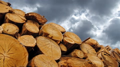 Stack of wood logs in forest time lapse Stock Footage
